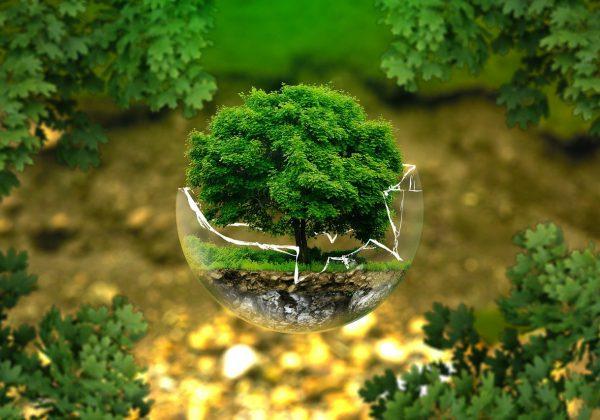 Ekologiczne aspekty w przedsiębiorstwach